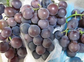 IMG_grape01.JPG