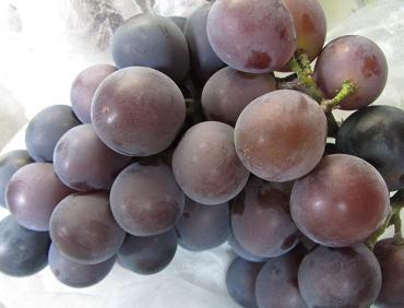 IMG_grape02.JPG